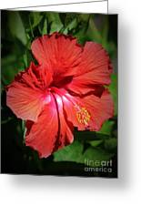 For The Love Of Hibiscus Greeting Card