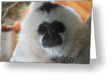 For The Love Of Monkeys Greeting Card