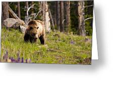 Foraging Grizzly Greeting Card