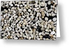 Foraminiferan Tests Greeting Card