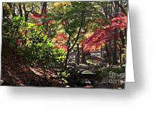 Forest #7 4k Greeting Card