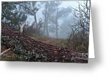 Forest And Fog In Serra Da Estrela Greeting Card