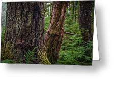 Forest At Camp Creek, Olympic National Forest, Washington, 2016 Greeting Card
