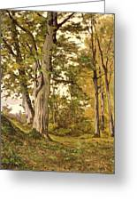 Forest At Fontainebleau Greeting Card