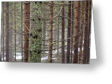Forest At Winter Greeting Card