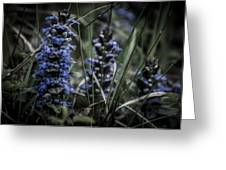 Forest Blues Greeting Card