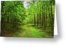 Forest Byway Greeting Card