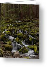 Forest Cathederal Greeting Card by Mike Reid