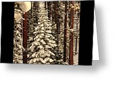 Forest Christmas Tree Greeting Card