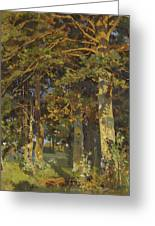 Forest Clearing Greeting Card