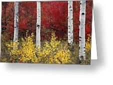Forest Color Greeting Card