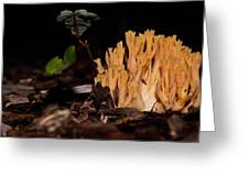 Forest Coral Fungi Greeting Card