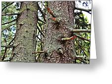 Forest Corrosion Bark Greeting Card