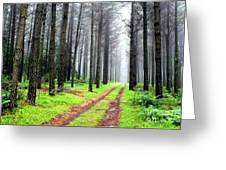 Forest Drive Greeting Card