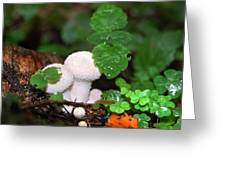 Forest Fairy Tale Greeting Card