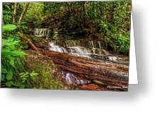 Forest Falls Greeting Card