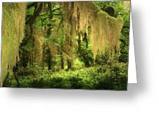 Forest Fantasy - Quinault - Gateway To Paradise On The Olympic Peninsula Wa Greeting Card by Christine Till