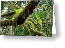 Forest Ferns Art Prints Fern Giclee Prints Baslee Troutman Greeting Card