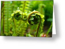 Forest Ferns Fine Art Photography Art Prints Baslee Troutman Greeting Card