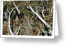 Forest Fire B Greeting Card