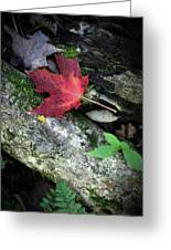 Forest Floor In Autumn Greeting Card
