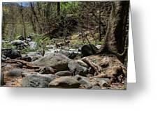 Forest Floor Near Oak Creek Greeting Card