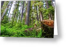 Forest Floor Of Hoh Rain Forest Greeting Card