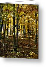 Forest Floor One Greeting Card