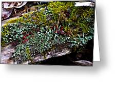 Forest Floral Delight Greeting Card