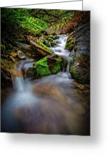 Forest Flow Greeting Card