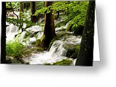 Forest Flows Greeting Card