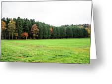 Forest In Bavaria Greeting Card