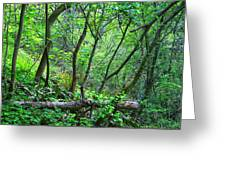 Forest In Hdr Greeting Card