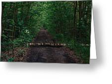 Forest Life Greeting Card