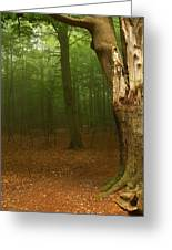 Forest Light 1 Greeting Card