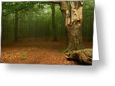 Forest Light 2 Greeting Card