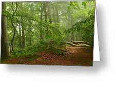 Forest Light 3 Greeting Card