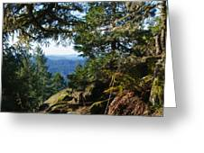 Forest Lookout Greeting Card