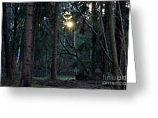 Forest Magic 7 Greeting Card