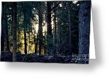 Forest Magic 8 Greeting Card