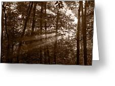 Forest Mist B And W Greeting Card