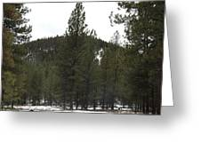Forest Mountain Redux Greeting Card