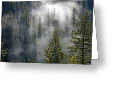 Forest Mystery Greeting Card