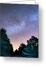 Forest Night Light Greeting Card