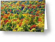 Forest Of Color Greeting Card