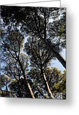 Forest Of Sintra Greeting Card
