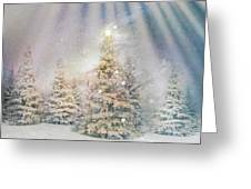 Forest Of Trees In The Light Greeting Card
