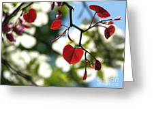 Forest Pansy Redbud Leaves In Spring Greeting Card