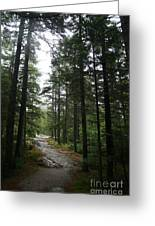 Forest Path At Grafton Notch State Park Greeting Card
