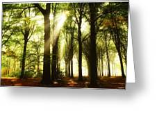 Forest Rays Greeting Card